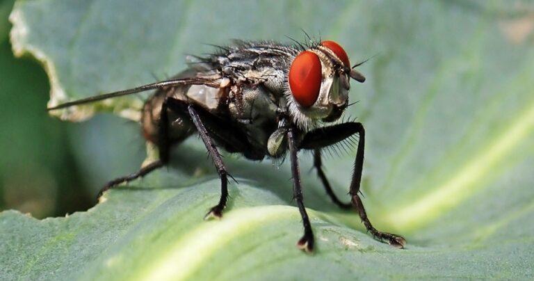 Do Flies Sleep
