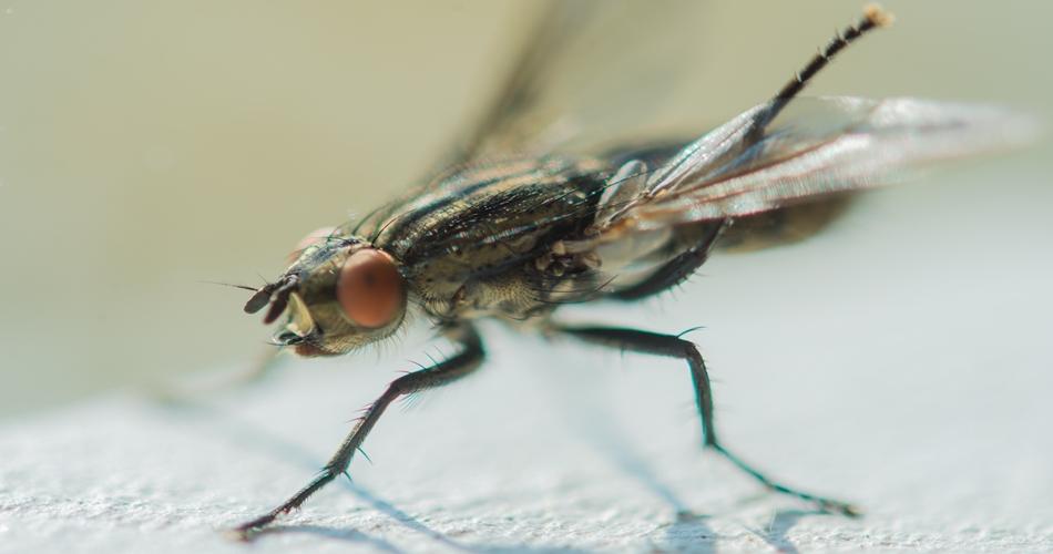 Do Flies Sleep image