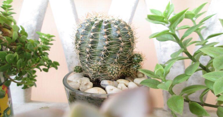 Best Plants for Your Bedroom That Will Help You Sleep - Tip Top Sleep