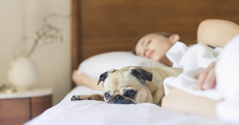 Pros and Cons of Sleeping with Your Dog - Tip Top Sleep