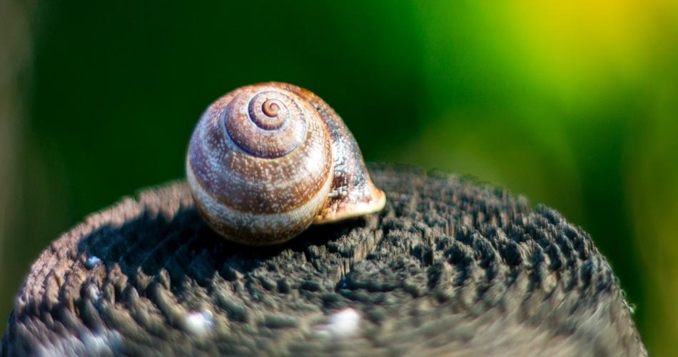 Do Snails Sleep? If so for how long.