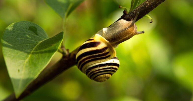 Do Snails Sleep? If so for How Long? - Tip Top Sleep