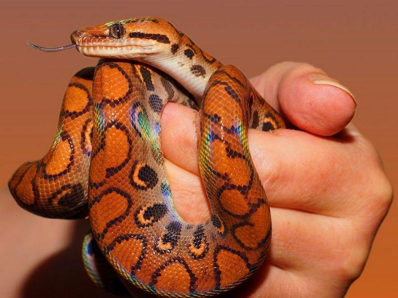 Do Snakes Sleep?