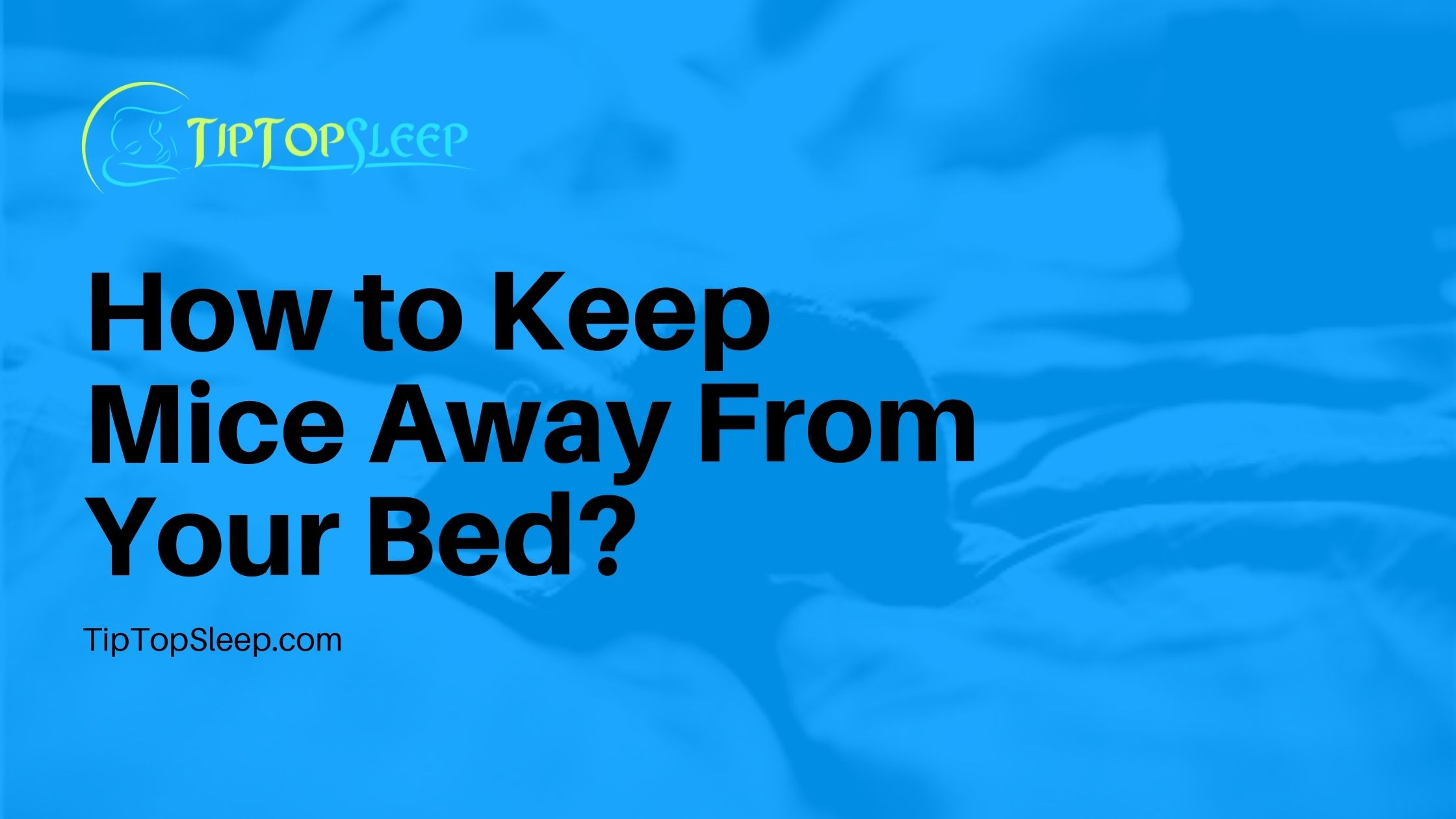 How-to-Keep-Mice-Away-From-Your-Bed