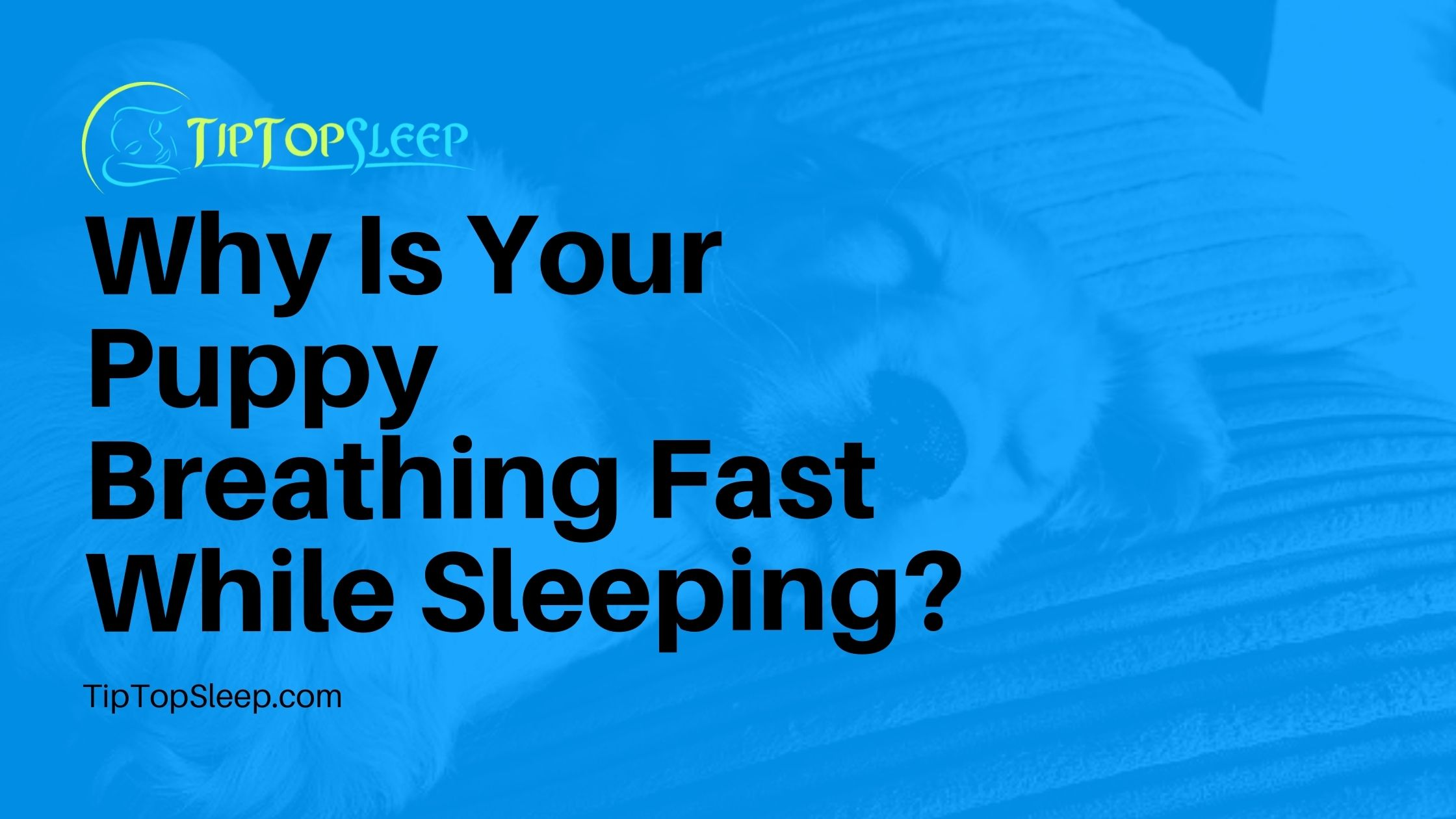 Puppy-Breathing-Fast-While-Sleeping