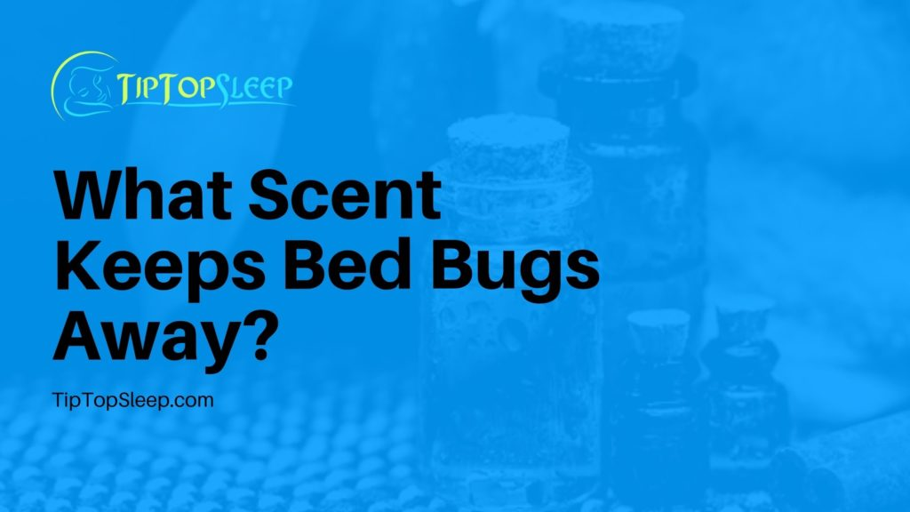 What-Scent-Keeps-Bed-Bugs-Away