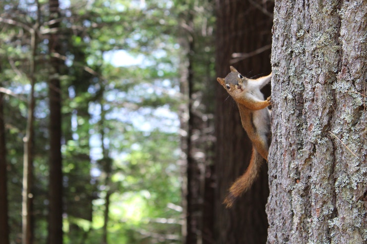 Where Do Squirrels Sleep? - Tip Top Sleep